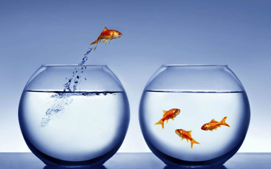 You now have a shorter attention span than a goldfish!